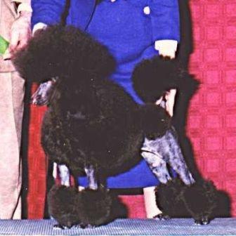 Image Result For Oodles Of Poodles